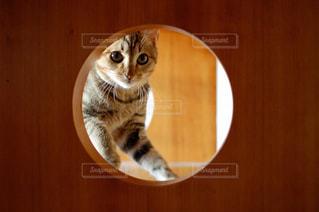 猫,動物,ペット,子猫,人物,可愛い,隠れる,見つめる,覗く,キジトラ,ネコ
