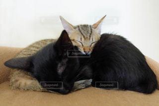 猫,動物,屋内,ペット,寝顔,寝る,子猫,人物,可愛い,黒猫,姉妹,キジトラ,ネコ