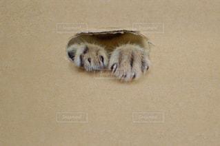 猫,動物,屋内,手,ペット,遊ぶ,人物,可愛い,隠れる,ダンボール,キジトラ,楽しそう,ネコ,両手