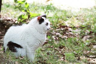 猫,自然,動物,屋外,緑,昼寝,居眠り,ペット,人物,可愛い,外猫,ネコ
