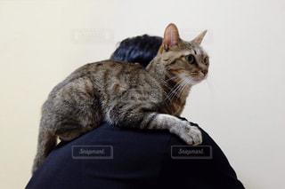男性,猫,動物,屋内,仲良し,ペット,子猫,人物,背中,可愛い,肩の上,ネコ,肩,乗る