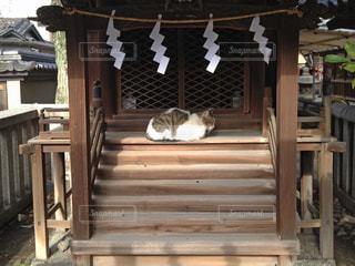 猫,動物,屋外,神社,居眠り,ペット,寝る,人物,木目,ネコ