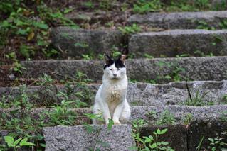 猫,動物,階段,寝る,人物,座る,石,外猫,ネコ,鎮座,落ち着いて