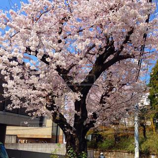 花の写真・画像素材[208295]