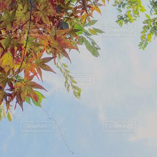 木の隣のヤシの木の群しの写真・画像素材[2380706]