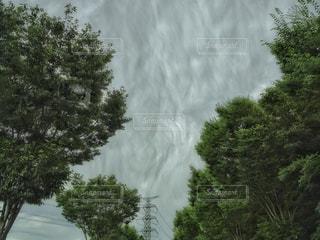 台風の風に揺れる街路樹と不気味な雲の写真・画像素材[2425512]