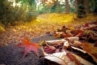 秋色の公園の写真・画像素材[2616567]