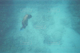 海,水着,泳ぐ,水中,人,ハワイ,フィルム,ダイビング,フィルム写真,海底,海底散歩,フィルムフォト