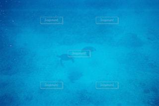 動物,魚,青,水族館,泳ぐ,水中,フィルム,ダイビング,亀,フィルム写真,海底,フィルムフォト