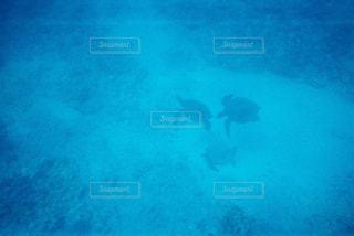 動物,青,泳ぐ,水中,ハワイ,フィルム,ダイビング,亀,フィルム写真,海底,海底散歩,フィルムフォト