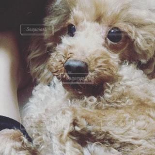 犬の写真・画像素材[14566]