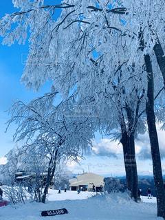 自然,アウトドア,空,冬,スポーツ,雪,屋外,晴れ,青空,雪山,樹木,人物,スキー,スノボ,ゲレンデ,レジャー,スキー場,スノーボード,樹氷,草木,冷凍,冷,寒空