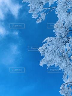 自然,アウトドア,空,冬,スポーツ,木,雪,雲,晴れ,青空,青い空,人物,ゲレンデ,レジャー,天気,樹氷,草木,寒空