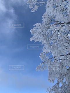 自然,アウトドア,空,冬,スポーツ,雪,屋外,晴れ,青空,樹木,人物,スキー,霜,ゲレンデ,レジャー,スキー場,スノーボード,樹氷,ウィンタースポーツ,草木,冷凍,冷,寒空