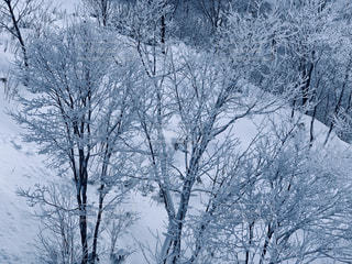 自然,風景,アウトドア,空,冬,森林,スポーツ,雪,屋外,雪山,樹木,人物,霜,ゲレンデ,レジャー,樹氷,斜面,草木,日中,冷凍,冷