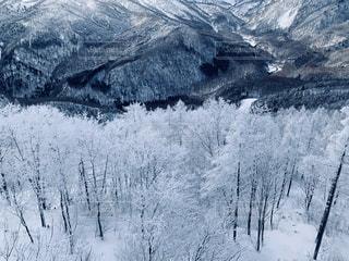 自然,風景,アウトドア,冬,スポーツ,木,雪,屋外,晴れ,雪山,冬景色,山,樹木,人物,スキー,霜,ゲレンデ,レジャー,スキー場,山林,スノーボード,樹氷,斜面,ウィンタースポーツ,冷凍,覆う,冷,寒空