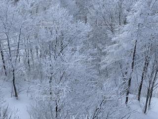 自然,風景,アウトドア,冬,森林,スポーツ,雪,屋外,雪山,樹木,人物,スキー,霜,ゲレンデ,レジャー,スキー場,スノーボード,樹氷,斜面,ウィンタースポーツ,白銀,冷凍,覆う,冷,寒空,風景写真,白い世界,ブリザード,冬の嵐