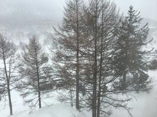 自然,アウトドア,空,冬,森林,スポーツ,雪,屋外,霧,樹木,人物,ゲレンデ,レジャー,スキー場,草木,冬空,針葉樹,日中,寒空,山腹