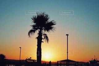 背景に夕日のあるヤシの木(ソテツ)の写真・画像素材[3599007]