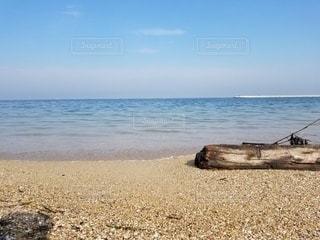 大海より流れ着きし木々。の写真・画像素材[3599005]