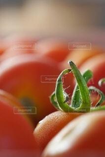 食べ物,自然,夏,緑,赤,鮮やか,オレンジ,果物,トマト,野菜,いっぱい,食品,たくさん,おいしい,グリーン,家庭菜園,明るい,農業,栽培,レッド,集合,ビタミン,農家,食材,壁紙,彩り,ベジタブル,マクロ,リコピン,へた,育成,かがみ,クローズ アップ,液滴