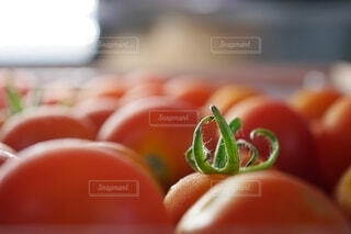 トマトのクローズアップ(広角端)の写真・画像素材[3669446]