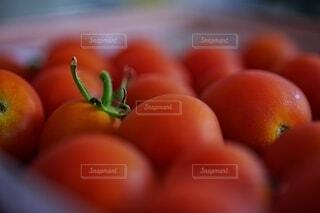 食べ物,自然,夏,緑,赤,鮮やか,オレンジ,果物,トマト,野菜,いっぱい,食品,たくさん,おいしい,グリーン,家庭菜園,明るい,農業,栽培,レッド,集合,ビタミン,農家,食材,壁紙,草木,彩り,ベジタブル,リコピン,へた,育成,かがみ,クローズ アップ,液滴