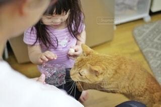 何を食べるのか気になる猫。の写真・画像素材[4175651]