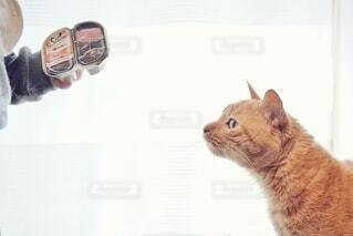 シーバを狙う茶色の猫。の写真・画像素材[4254342]