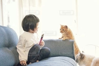 おやつに集まった猫ちゃんたち。の写真・画像素材[4269564]