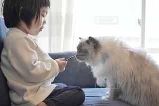 シーバをあげる子どもと食べる猫。の写真・画像素材[4269570]