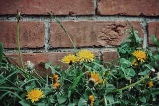 小路に咲く花の写真・画像素材[4332213]