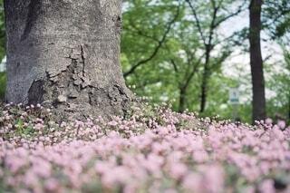 小さなはなと大木の写真・画像素材[4359902]