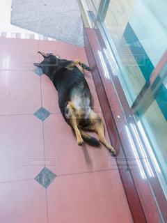 犬 - No.472701