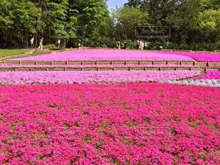 桜 - No.533126
