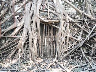 木の巣の写真・画像素材[925155]