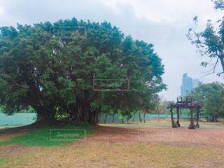 フィールドの大木の写真・画像素材[925168]