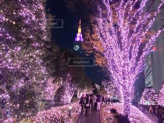 紫の花のグループ - No.938507