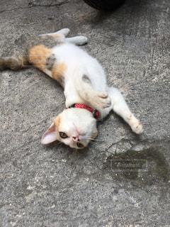 地面に横たわっている茶色と白犬の写真・画像素材[1254794]
