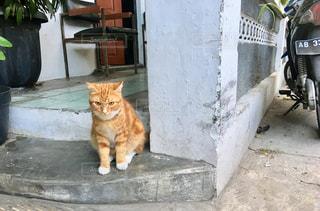 建物の上に座っている猫の写真・画像素材[1254896]