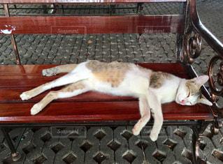 木製のベンチの上に横になっている猫の写真・画像素材[1254937]