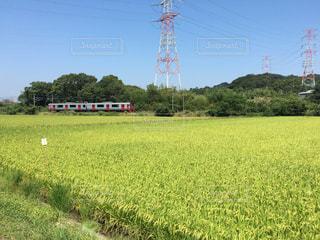 近くに緑豊かな緑のフィールドのの写真・画像素材[1393534]
