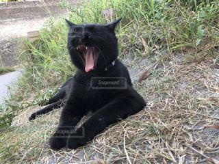 草の上に横たわっている黒い猫の写真・画像素材[2971283]