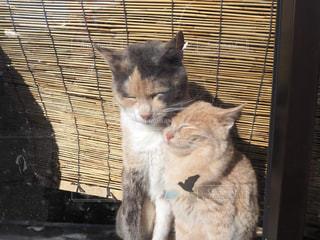 窓の前に座っている猫たちの写真・画像素材[2971282]
