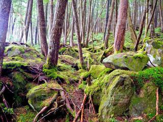 森の中の木の写真・画像素材[3140275]