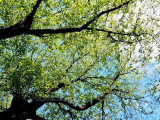 森の中の大きな木の写真・画像素材[3140276]
