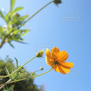 花のクローズアップの写真・画像素材[4330227]