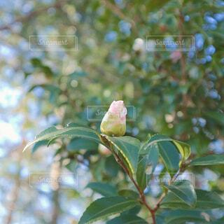 木の枝に止まっている小鳥の写真・画像素材[4343959]