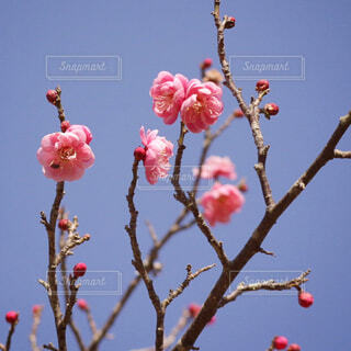 木の上に座っている鳥の写真・画像素材[4354261]