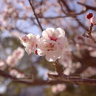 木の枝に花瓶の写真・画像素材[4354276]